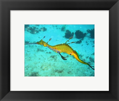 Framed Sea Horse - Yellow Print