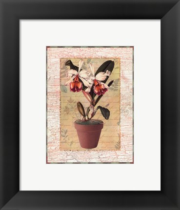 Framed Potted Cattleya Print