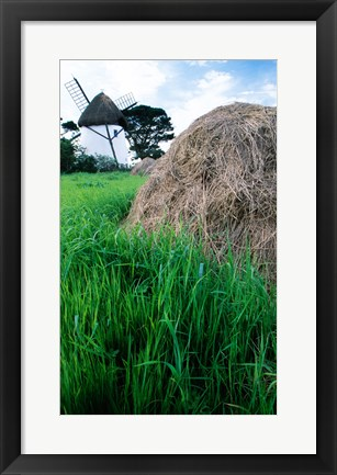 Framed Traditional windmill in a field, Tacumshane Windmill, Tacumshane, Ireland Print