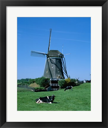 Framed Windmill and Cows, Wilsveen, Netherlands Print