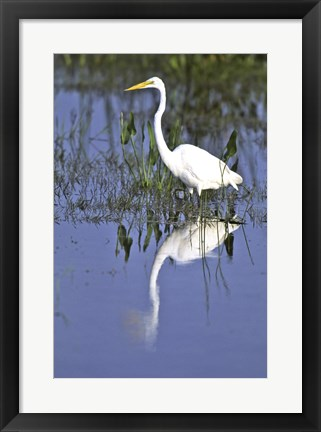 Framed Reflection of a Great Egret in Water Print