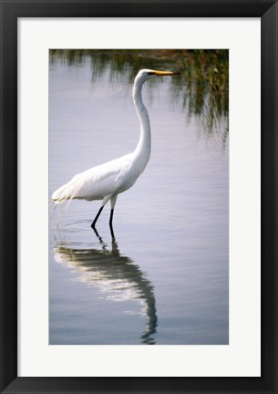 Framed Egret In River Print