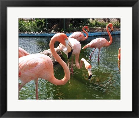 Framed Flamingos in a Zoo Print