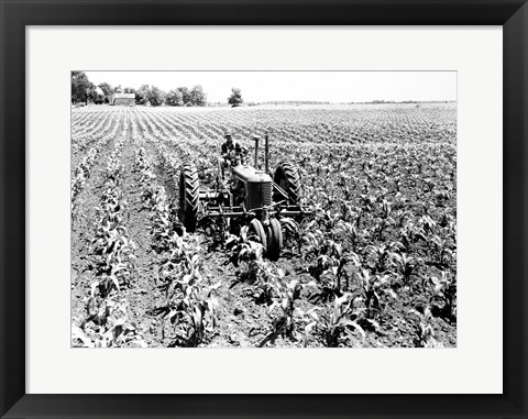 Framed Farmer Driving Tractor in Field Print