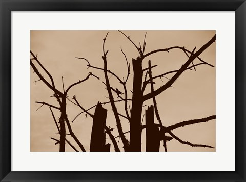 Framed Perched and Sat and Nothing More II Print