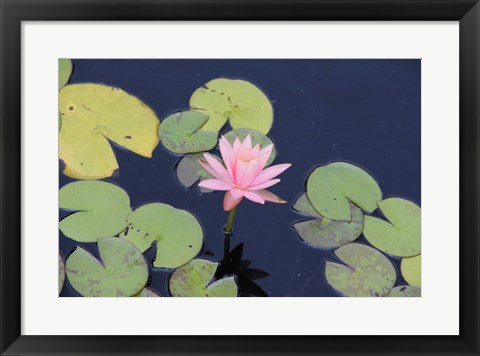 Framed Lotus Eaters I Print