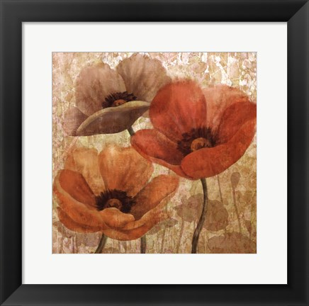 Framed Poppy Allure II Print