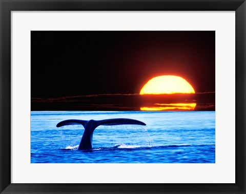 Framed Tail fin of a whale in the sea Print