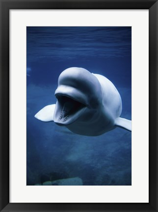 Framed White Whale Print
