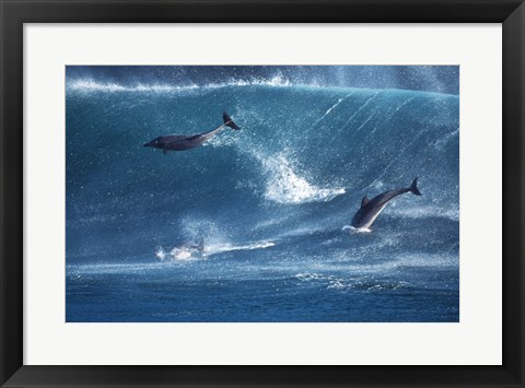 Framed Dolphins Catching A Wave Print