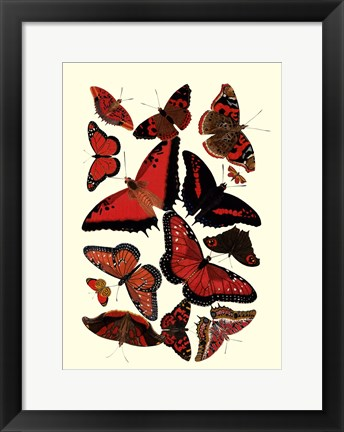 Framed Red Butterfly Study Print