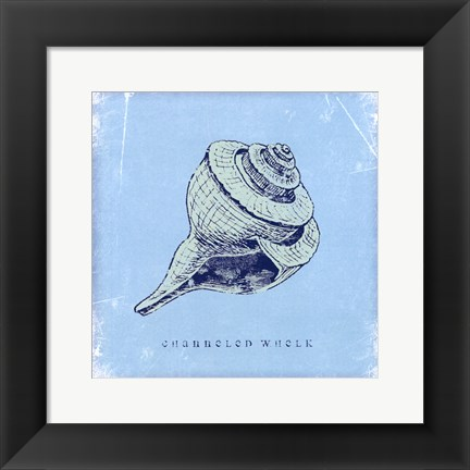 Framed Whelk Print