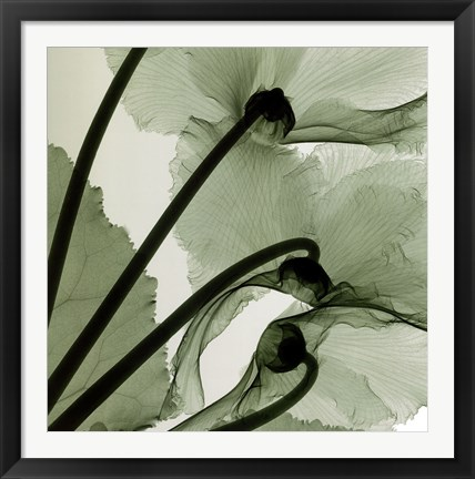 Framed Cyclamen Print