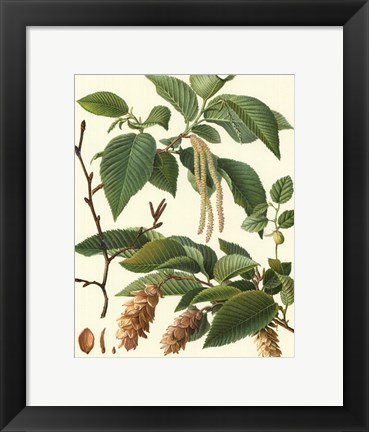 Framed Pincecones & Foliage I Print
