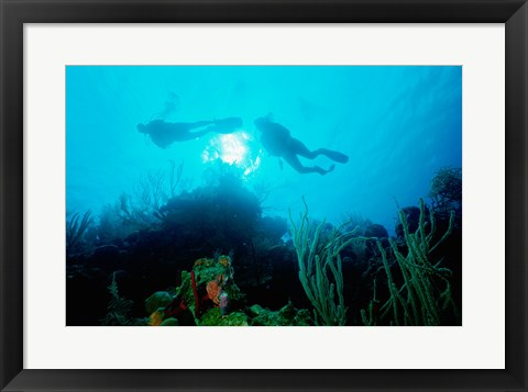 Framed Low angle view of two scuba divers swimming underwater, Belize Print