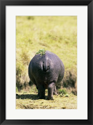 Framed Hippopotamus for Behind Print