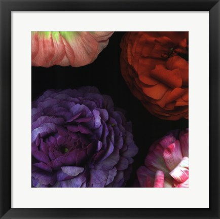 Framed Ranunculus I Left Print