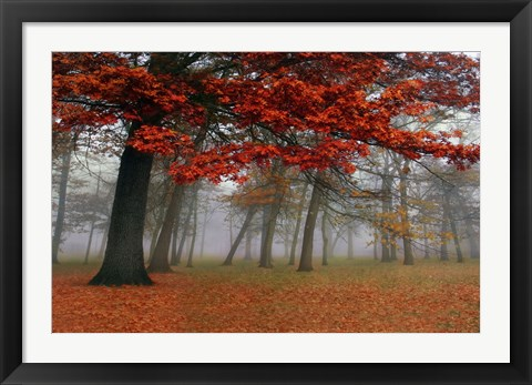 Framed Autumn Mist I Print