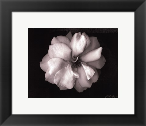 Framed Wild Rose- mini Print