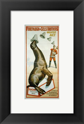 Framed Sea Lion Catching Hats Print