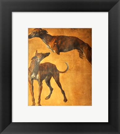 Framed Study of Greyhounds Print