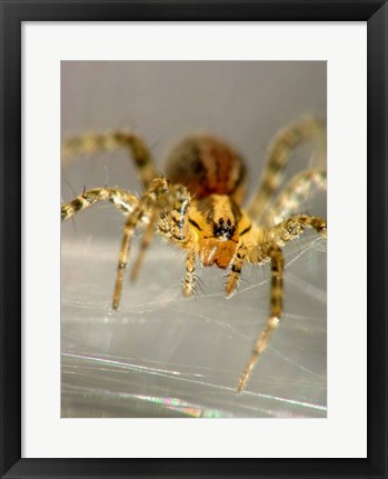 Framed Spider Spinning Web Print