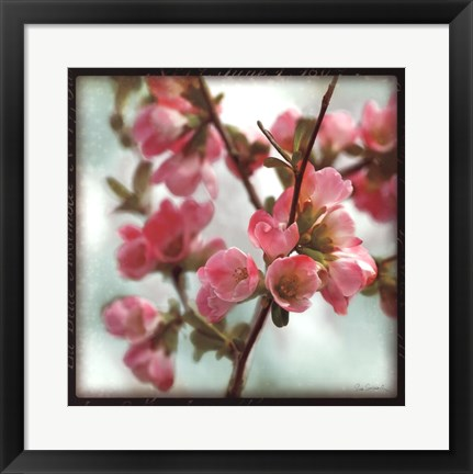 Framed Quince Blossoms II Print