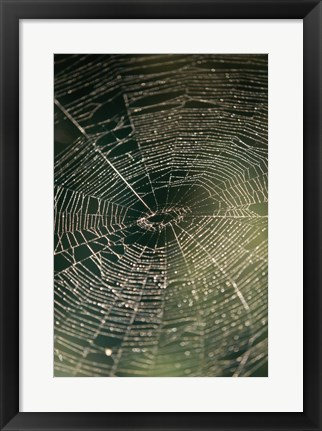Framed Close-up of a spider's web Print
