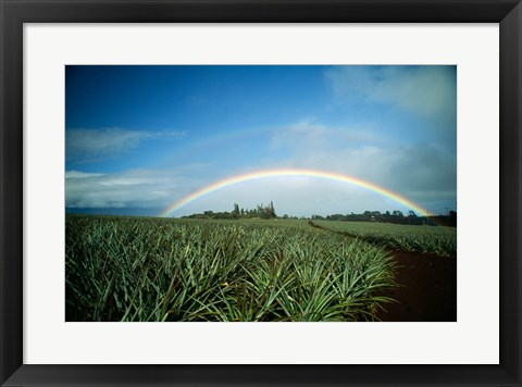 Framed Makawao, Rainbow over farm, USA, Hawaii Print
