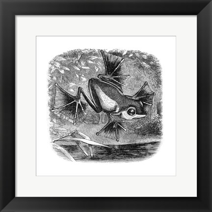 Framed Wallace Frog Print
