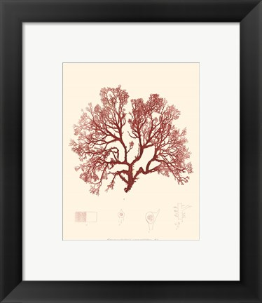 Framed Nature Print in Coral II Print