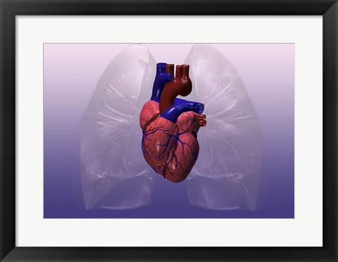 Framed Close-up of a human heart model Print
