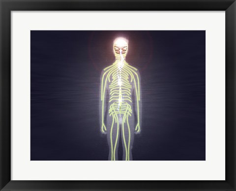 Framed Central nervous system of the human body Print