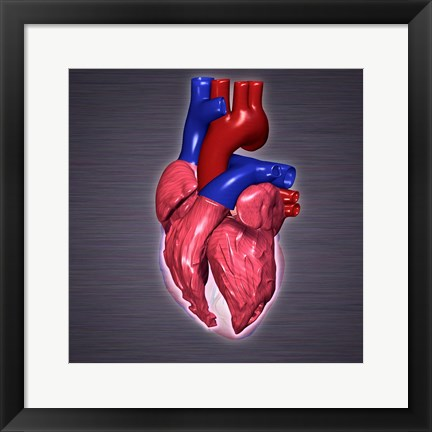 Framed Close-up of a human heart Print