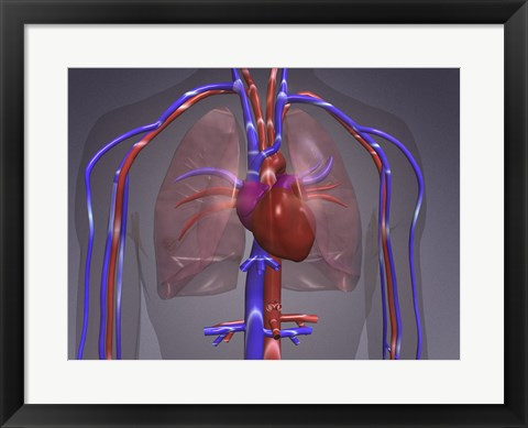 Framed Close-up of the circulatory system Print