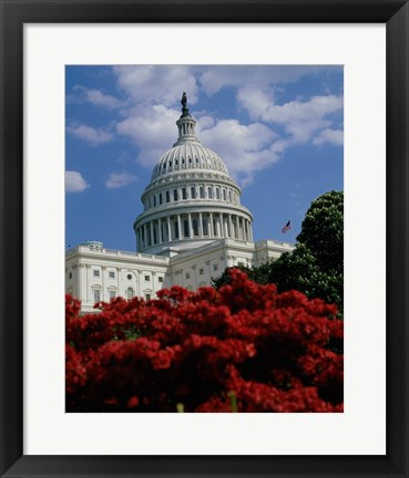 Framed Flowering plants in front of the Capitol Building, Washington, D.C., USA Print