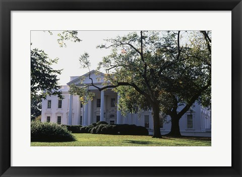Framed Trees in front of a government building, White House, Washington DC, USA Print