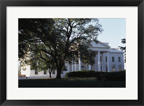 Framed Tree in front of a government building, White House, Washington DC, USA Print