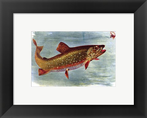 Framed Brook Trout American Fishes Print