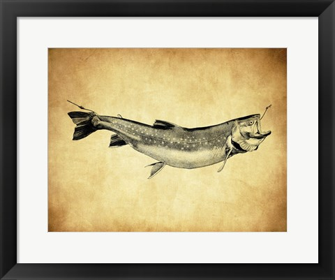 Framed Trout - black and white Print