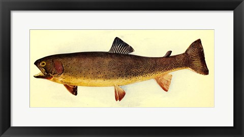 Framed Yellowstone cutthroat trout Print