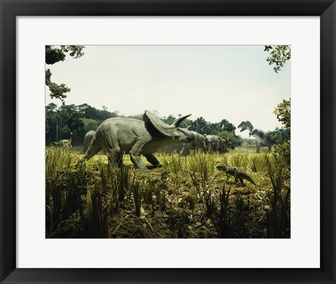 Framed Triceratops with a tyrannosaur and a torosaurus in a forest Print