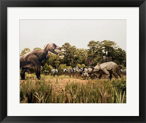 Framed Tyrannosaur standing in front of a group of triceratops in a field Print