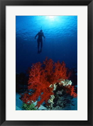 Framed Soft Coral Red Sea Print