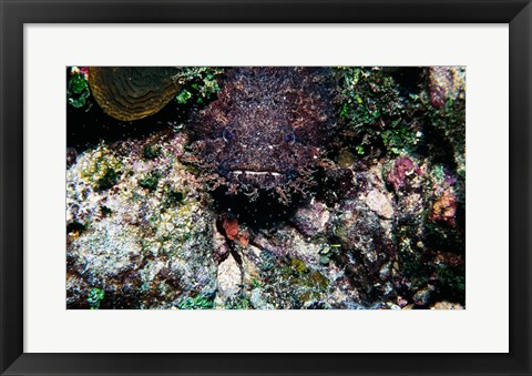 Framed High angle view of a toadfish Print