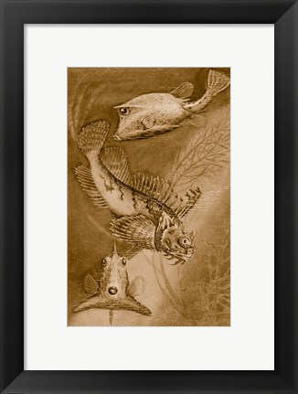 Framed Cow trunk fish, orange sea raven, common trunk fish Print