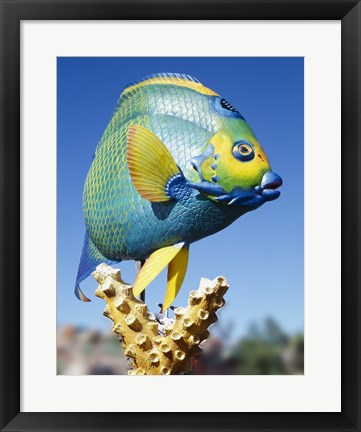 Framed Fish carving, Florida Keys Print