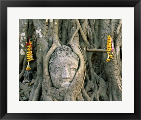 Framed Buddha head in tree roots, Wat Mahathat, Ayutthaya, Thailand Print
