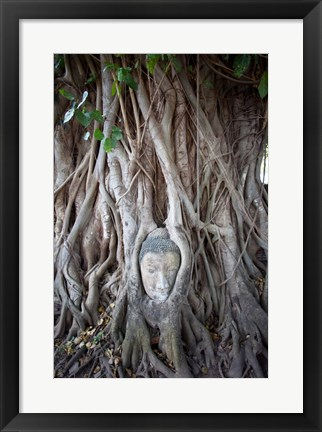 Framed Buddha Head in the Roots of a Tree Print