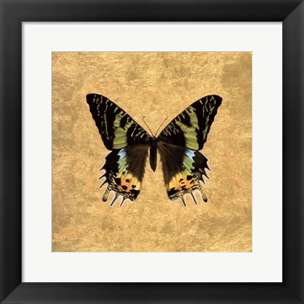 Framed Butterfly on Gold Print